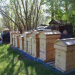8 frame medium beehive