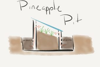 Pineapple Pit. A central cold frame boarded by manure filled compost pits.
