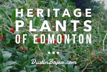 Heritage Plants of Edmonton, Heritage Trees