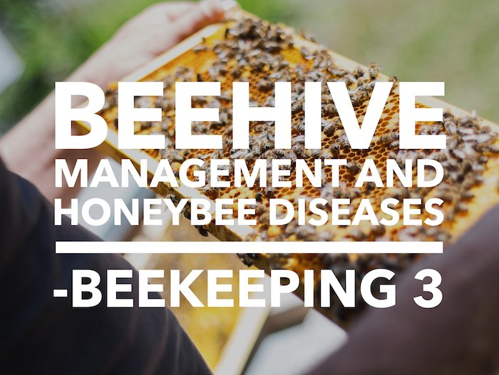 Edmnton Beekeeping Course, Beehive Management and Honeybee Diseses, Dustin Bajer