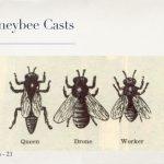 Dustin Bajer, Edmonton Beekeeping Course, All About Honeybees, Honeybee Casts, Queen, Drone, Worker