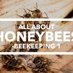 Edmonton Beekeeping Course, All About Honeybees, Dustin Bajer