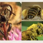 Dustin Bajer, Edmonton Beekeeping Course, All About Honeybees, Honeybee Biology and Anatomy