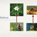 Dustin Bajer, Edmonton Beekeeping Course, All About Honeybees, Honeybee and Flower Evolution