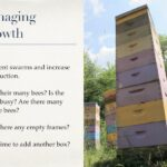 Edmonton Beekeeping Course, Beehive Management and Honeybee Diseases, Managing Growth