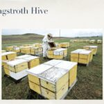Edmonton Beekeeping Course, Getting Started in Beekeeping, Langstroth Hives