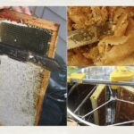 Edmonton Beekeeping Course, Honey Harvesting and Beehive Winterization, Honey Extraction