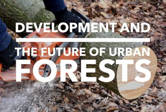 Development and the Future of Urban Forests, Edmonton Heritage Trees, Dustin Bajer