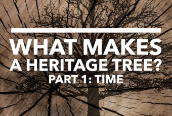 What Makes A heritage Tree? Part 1, Time, Dustin Bajer, Edmonton Heritage Trees