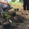 Forest City Plants Propagation Course, Forest City Plants Nursery, Butternut, Ohio Buckeye, and Horsechestnut Trees