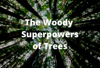 Shrubscriber, The Woody Superpowers of Trees.png